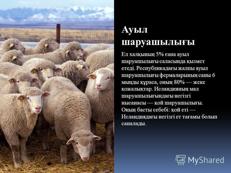 Ауыл шаруашылығы Ел халқының 5% ғана ауыл шаруашылығы саласында қызмет етеді. Республикадағы жалпы ауыл шаруашылығы фермаларының саны 6 мыңды құраса, оның 80% жеке қожалықтар. Исландияның мал шаруашылығындағы негізгі нысанасы қой шаруашылығы. Оның ба
