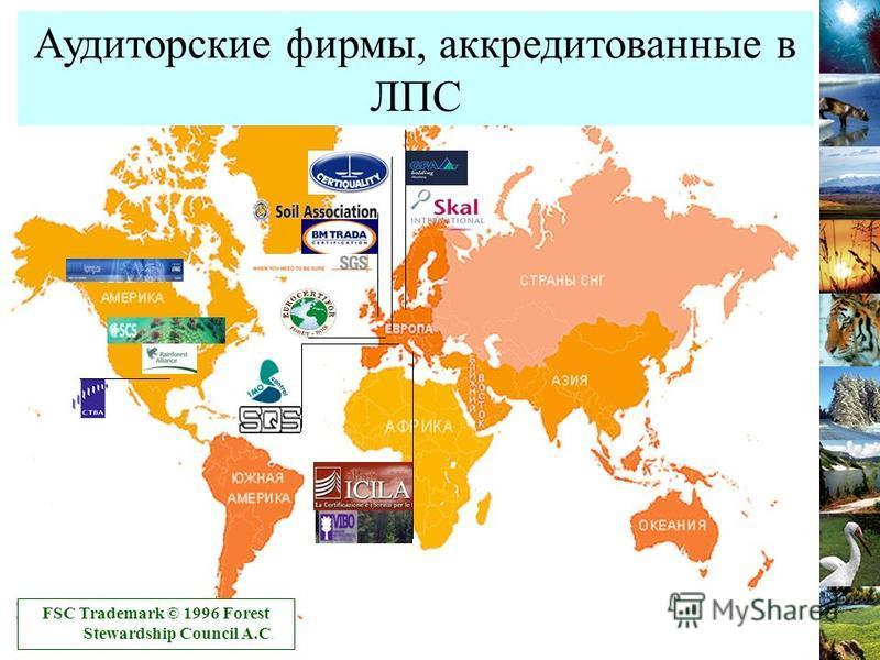 Аудиторские фирмы, аккредитованные в ЛПС FSC Trademark © 1996 Forest Stewardship Council A.C.
