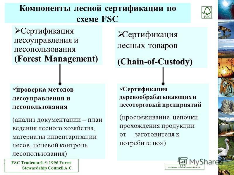Компоненты лесной сертификации по схеме FSC Сертификация лесоуправления и лесопользования (Forest Management) Сертификация лесоуправления и лесопользования (Forest Management) Сертификация лесных товаров Сертификация лесных товаров(Chain-of-Custody)