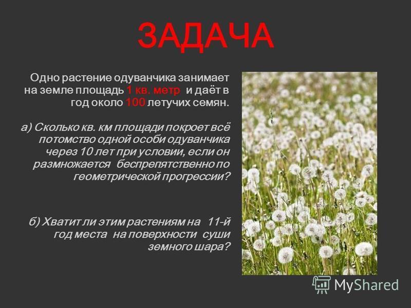 ЗАДАЧА Одно растение одуванчика занимает на земле площадь 1 кв. метр и даёт в год около 100 летучих семян. а) Сколько кв. км площади покроет всё потомство одной особи одуванчика через 10 лет при условии, если он размножается беспрепятственно по геоме
