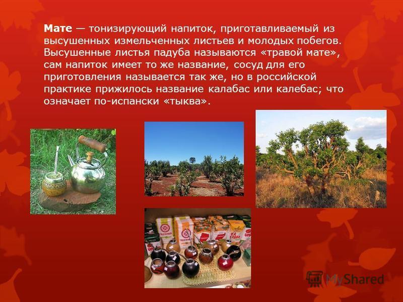 Мате тонизирующий напиток, приготавливаемый из высушенных измельченных листьев и молодых побегов. Высушенные листья падуба называются «травой мате», сам напиток имеет то же название, сосуд для его приготовления называется так же, но в российской прак