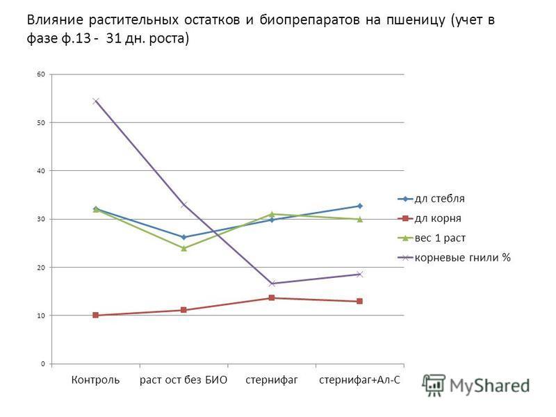 Влияние растительных остатков и биопрепаратов на пшеницу (учет в фазе ф.13 - 31 дн. роста)