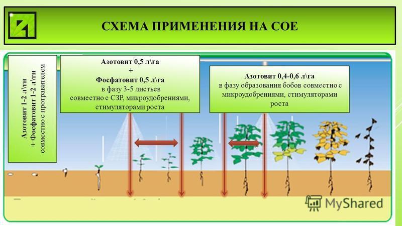 СХЕМА ПРИМЕНЕНИЯ НА СОЕ Азотовит 1-2 л\тн + Фосфатовит 1-2 л\тн совместно с протравителем Азотовит 0,5 л\га + Фосфатовит 0,5 л\га в фазу 3-5 листьев совместно с СЗР, микроудобрениями, стимуляторами роста Азотовит 0,4-0,6 л\га в фазу образования бобов
