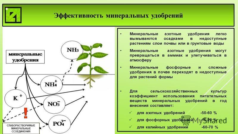 СЛАБОРАСТВОРИМЫЕ МИНЕРАЛЬНЫЕ ССОЕДИНЕНИЯ Эффективность минеральных удобрений Минеральные азотные удобрения легко вымываются осадками в недоступные растениям слои почвы или в грунтовые воды Минеральные азотные удобрения могут превращаться в аммиак и у