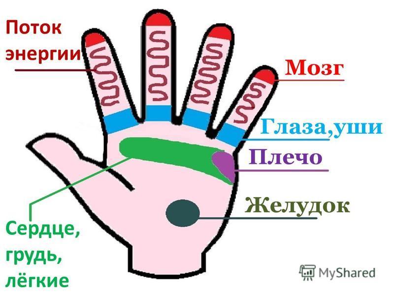 Мозг Поток энергии Глаза,уши Плечо Сердце, грудь, лёгкие Желудок