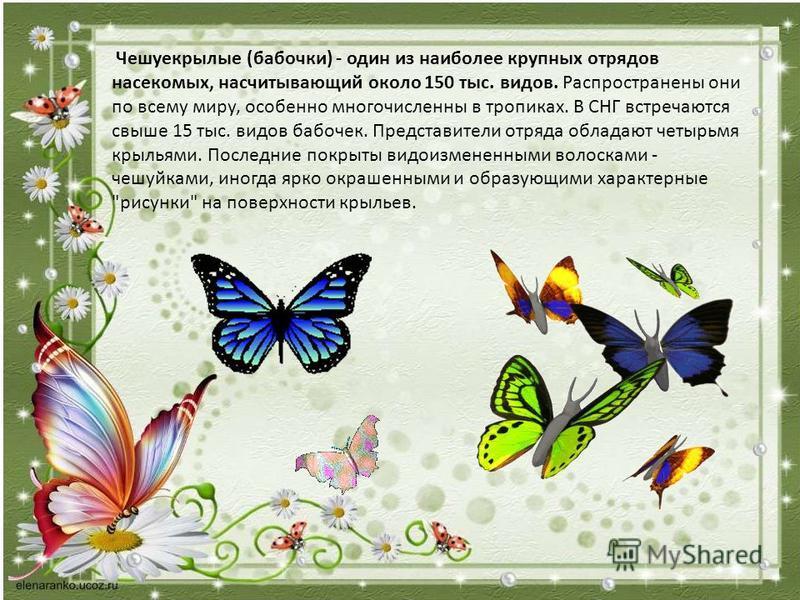 Чешуекрылые (бабочки) - один из наиболее крупных отрядов насекомых, насчитывающий около 150 тыс. видов. Распространены они по всему миру, особенно многочисленны в тропиках. В СНГ встречаются свыше 15 тыс. видов бабочек. Представители отряда обладают