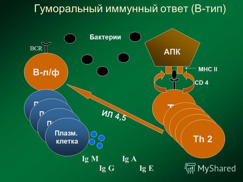 Гуморальный иммунный ответ (В-тип) В-л/ф ИЛ 4,5 АПК CD 4 ТhТh Тh 2 MHC II Бактерии Тh 2 Плазм. клетка Плазм. клетка Плазм. клетка Плазм. клетка Ig M Ig G Ig A Ig E BCR