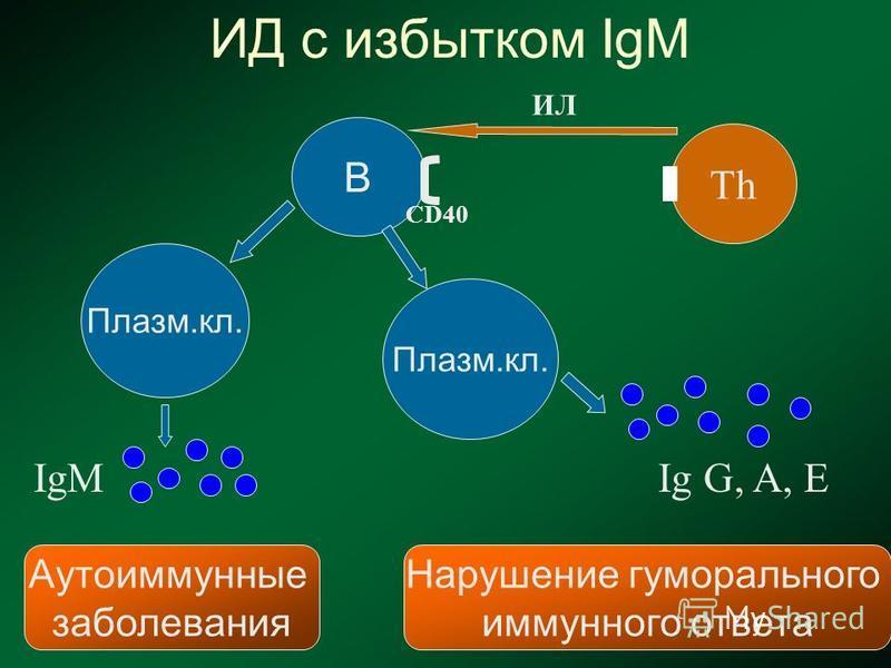 ТhТh В Плазм.кл. ИД с избытком IgM IgM Плазм.кл. Ig G, A, E Аутоиммунные заболевания Нарушение гуморального иммунного ответа ИЛ CD40