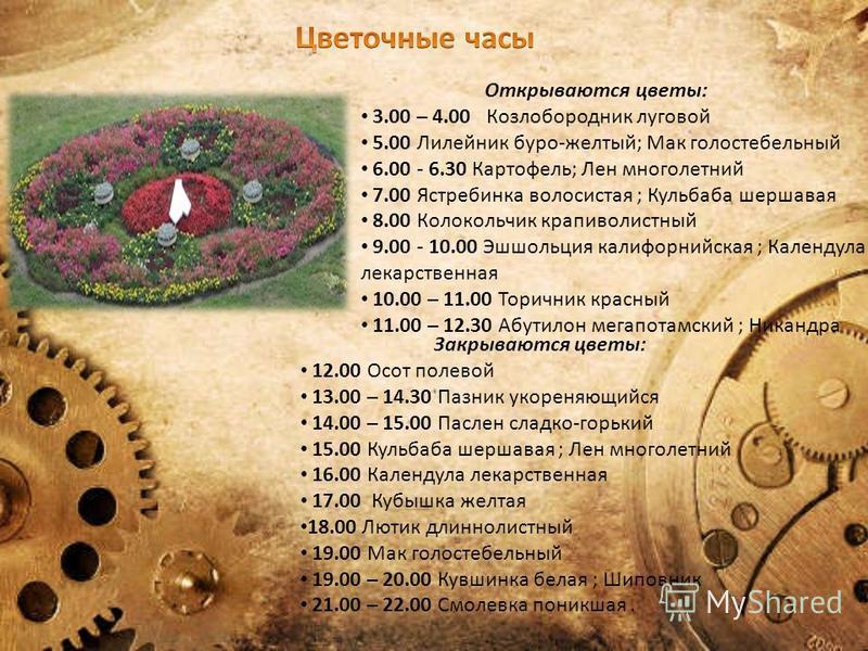 Открываются цветы: 3.00 – 4.00 Козлобородник луговой 5.00 Лилейник буро-желтый; Мак голостебельный 6.00 - 6.30 Картофель; Лен многолетний 7.00 Ястребинка волосистая ; Кульбаба шершавая 8.00 Колокольчик крапиволистный 9.00 - 10.00 Эшшольция калифорний