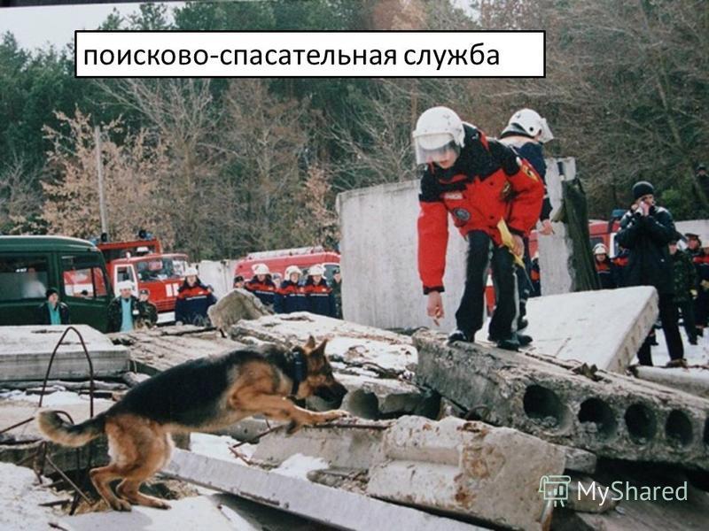поисково-спасательная служба