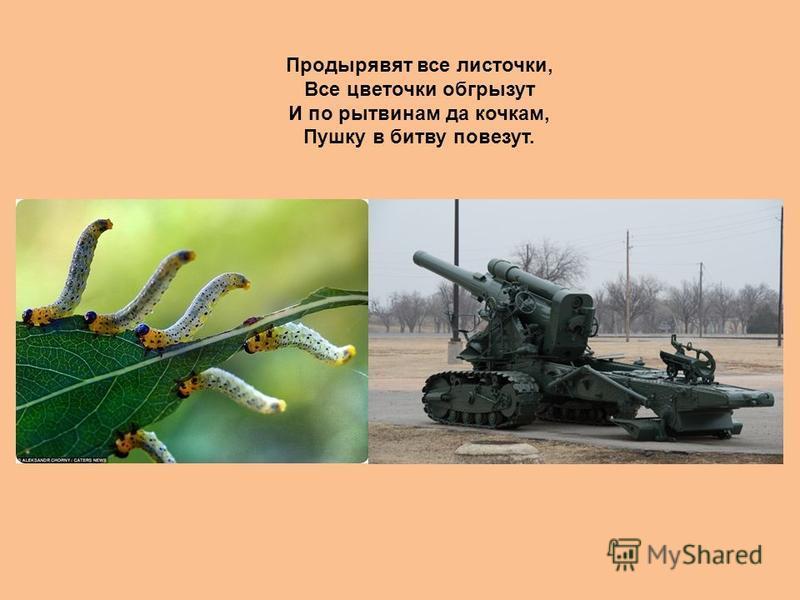 Продырявят все листочки, Все цветочки обгрызут И по рытвинам да кочкам, Пушку в битву повезут.
