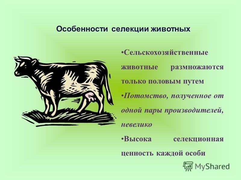 Сельскохозяйственные животные размножаются только половым путем Потомство, полученное от одной пары производителей, невелико Высока селекционная ценность каждой особи Особенности селекции животных