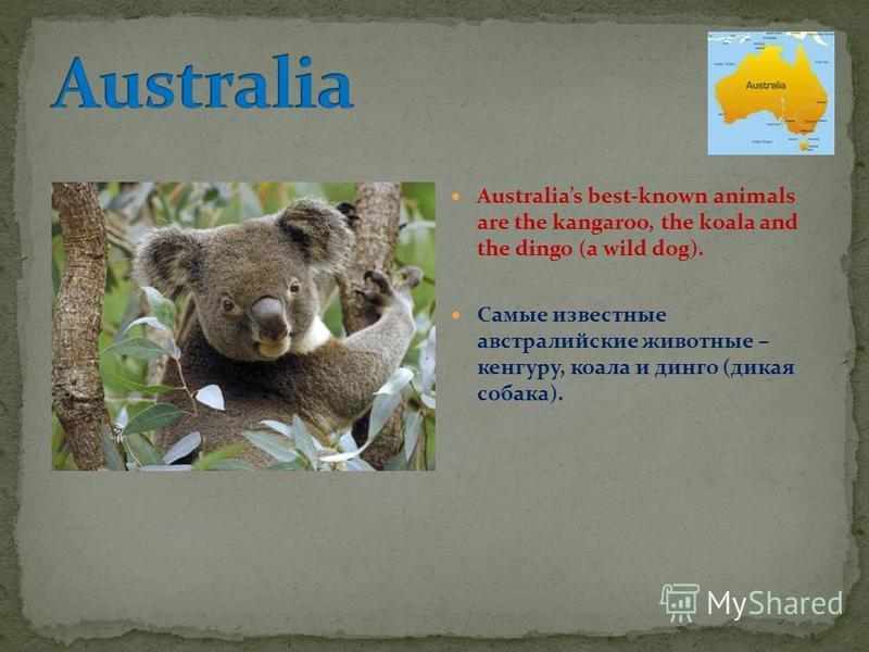 Australias best-known animals are the kangaroo, the koala and the dingo (a wild dog). Самые известные австралийские животные – кенгуру, коала и динго (дикая собака).