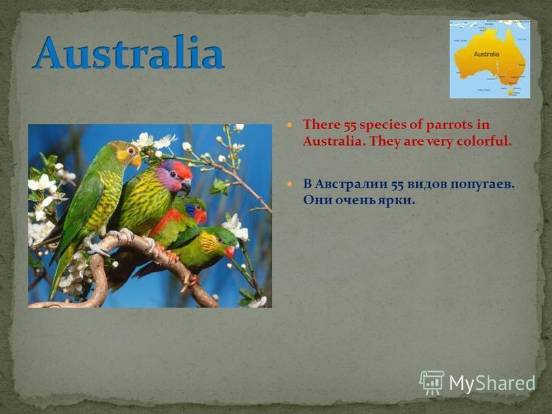 There 55 species of parrots in Australia. They are very colorful. В Австралии 55 видов попугаев. Они очень ярки.