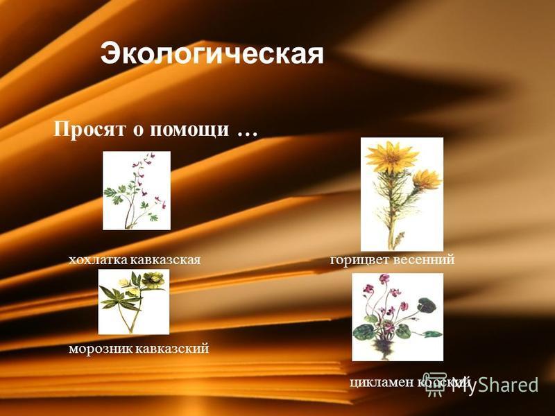 Экологическая П Просят о помощи … хохлатка кавказская горицвет весенний морозник кавказский цикламен косский
