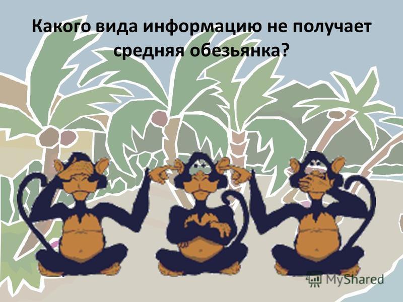 Какого вида информацию не получает средняя обезьянка?