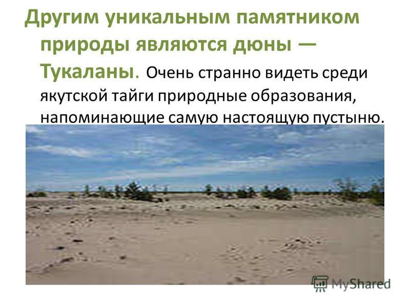 Другим уникальным памятником природы являются дюны Тукаланы. Очень странно видеть среди якутской тайги природные образования, напоминающие самую настоящую пустыню. Они по праву считаются