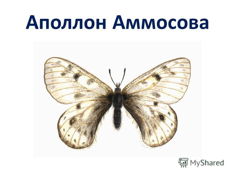 Аполлон Аммосова