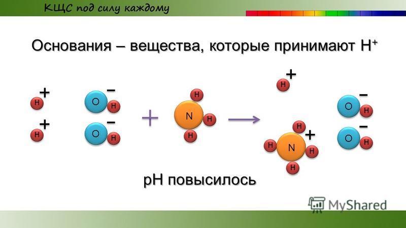 Основания – вещества, которые принимают Н + О н н О н н О н О н н рН повысилось N н н н н N н н н
