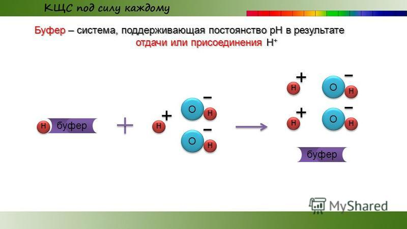 Буфер – система, поддерживающая постоянство рН в результате отдачи или присоединения H + О н н О н О н н О н н н буфер