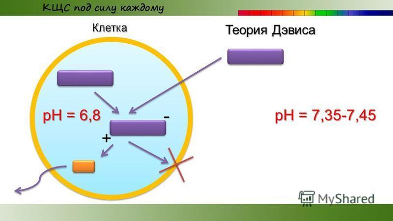 рН = 6,8 Клетка рН = 7,35-7,45 + - Теория Дэвиса
