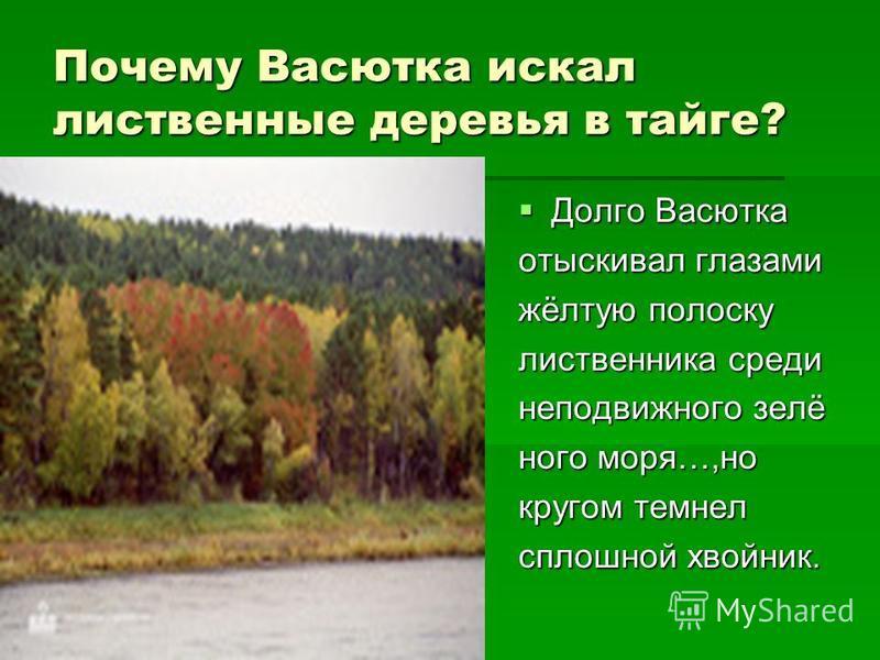 Почему Васютка искал лиственные деревья в тайге? Долго Васютка Долго Васютка отыскивал глазами жёлтую полоску лиственница среди неподвижного зелёного моря…,но кругом темнел сплошной хвойник.