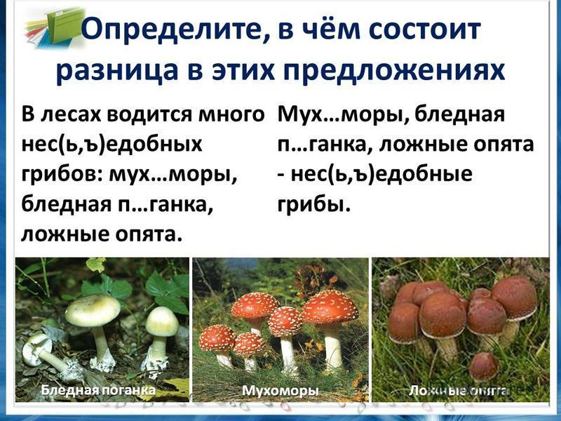 Определите, в чём состоит разница в этих предложениях В лесах водится много нес(ь,ъ)съедобных грибов: мух…моры, бледная п…ганка, ложные опята. Мух…моры, бледная п…ганка, ложные опята - нес(ь,ъ)съедобные грибы. Мухоморы Ложные опята Бледная поганка