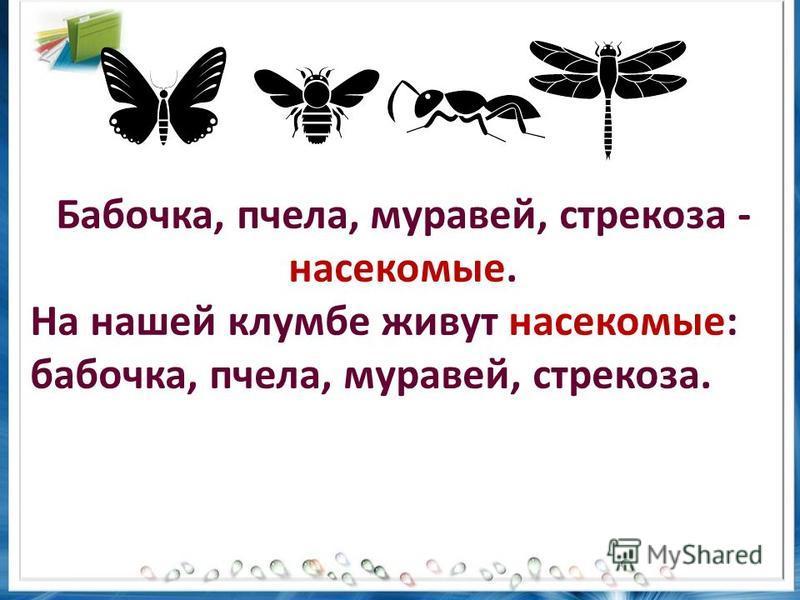 Бабочка, пчела, муравей, стрекоза - насекомые. На нашей клумбе живут насекомые: бабочка, пчела, муравей, стрекоза.