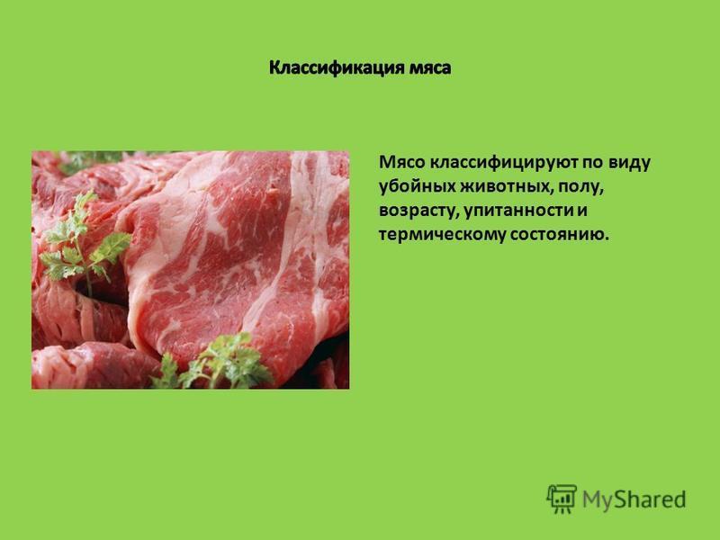 Мясо классифицируют по виду убойных животных, полу, возрасту, упитанности и термическому состоянию.