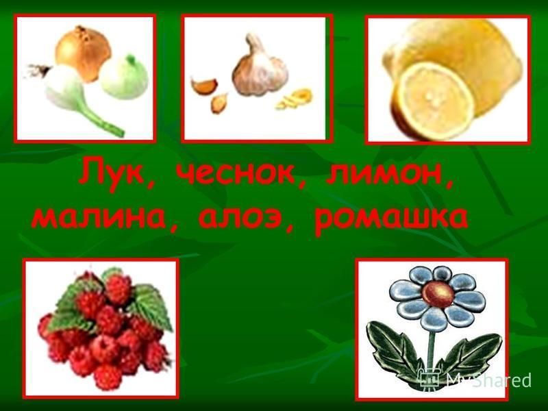 Лук, чеснок, лимон, малина, алоэ, ромашка
