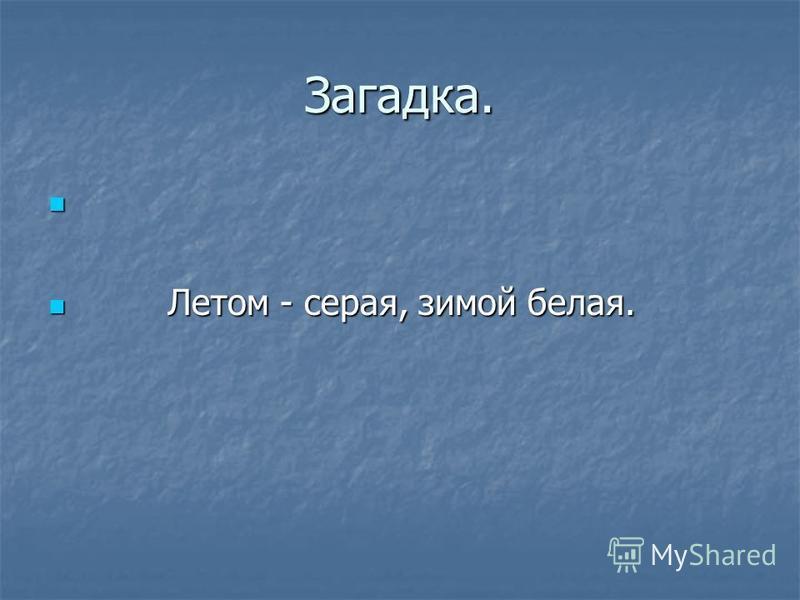 Загадка. Летом - серая, зимой белая. Летом - серая, зимой белая.