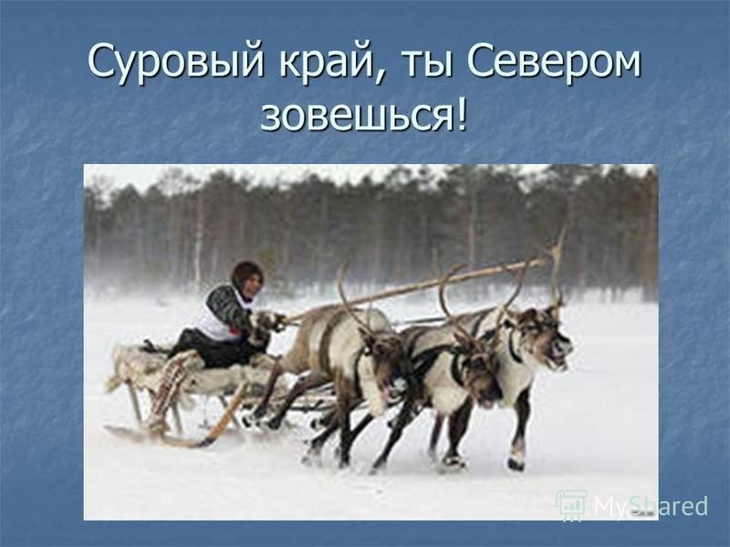 Суровый край, ты Севером зовешься!