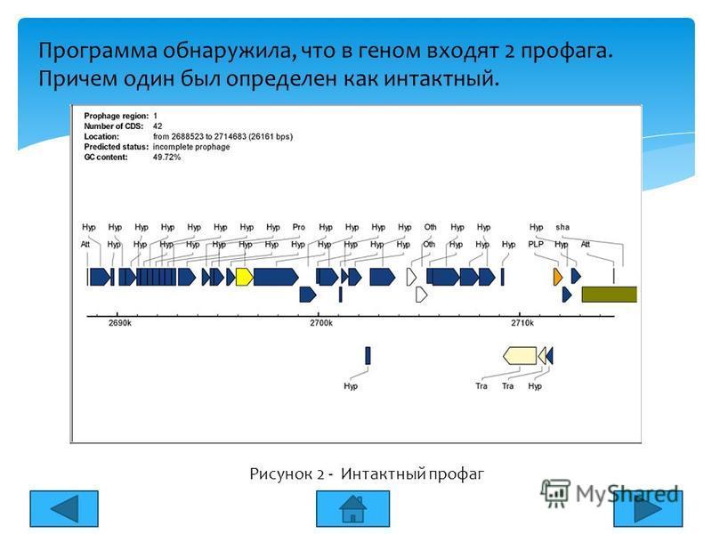 Программа обнаружила, что в геном входят 2 профага. Причем один был определен как интактный. Рисунок 2 - Интактный профаг