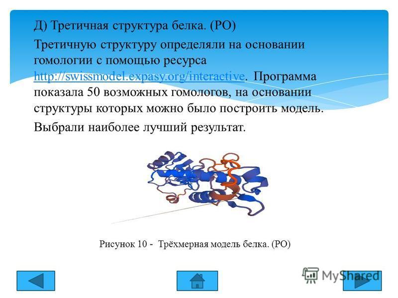 Д) Третичная структура белка. (РО) Третичную структуру определяли на основании гомологии с помощью ресурса http://swissmodel.expasy.org/interactive. Программа показала 50 возможных гомологов, на основании структуры которых можно было построить модель