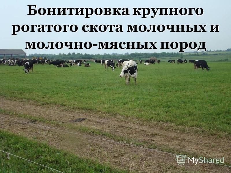 1 Бонтировка крупного рогатого скота молочных и молочно-мясных пород