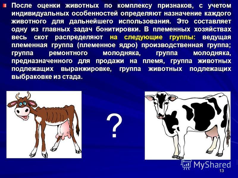 После оценки животных по комплексу признаков, с учетом индивидуальных особенностей определяют назначение каждого животного для дальнейшего использования. Это составляет одну из главных задач бонтировки. В племенных хозяйствах весь скот распределяют н
