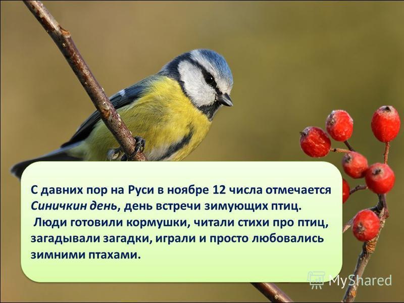С давних пор на Руси в ноябре 12 числа отмечается Синичкин день, день встречи зимующих птиц. Люди готовили кормушки, читали стихи про птиц, загадывали загадки, играли и просто любовались зимними птахами. С давних пор на Руси в ноябре 12 числа отмечае