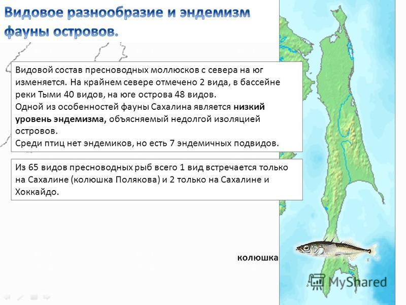 Видовой состав пресноводных моллюсков с севера на юг изменяется. На крайнем севере отмечено 2 вида, в бассейне реки Тыми 40 видов, на юге острова 48 видов. Одной из особенностей фауны Сахалина является низкий уровень эндемизма, объясняемый недолгой и