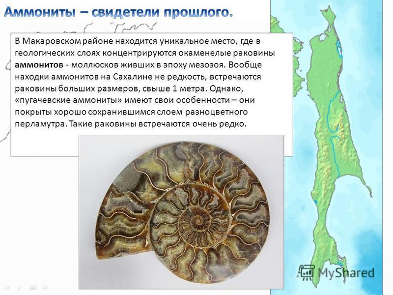 В Макаровском районе находится уникальное место, где в геологических слоях концентрируются окаменелые раковины аммонитов - моллюсков живших в эпоху мезозоя. Вообще находки аммонитов на Сахалине не редкость, встречаются раковины больших размеров, свыш