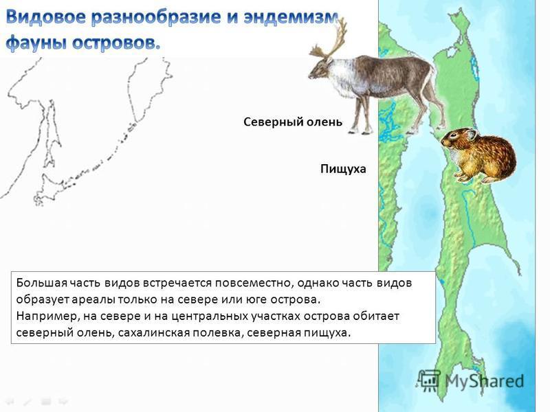 Большая часть видов встречается повсеместно, однако часть видов образует ареалы только на севере или юге острова. Например, на севере и на центральных участках острова обитает северный олень, сахалинская полевка, северная пищуха. Северный олень Пищух