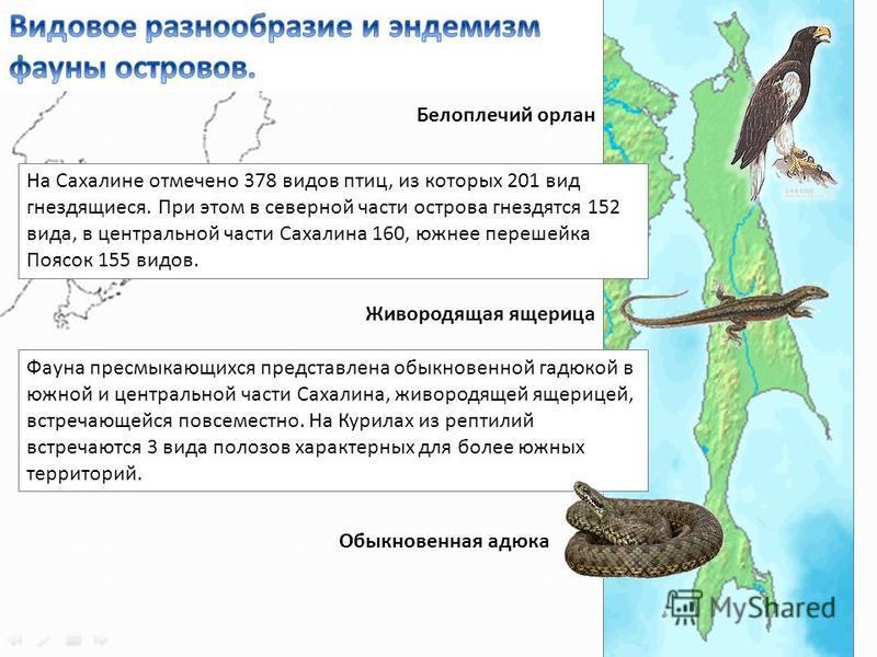 На Сахалине отмечено 378 видов птиц, из которых 201 вид гнездящиеся. При этом в северной части острова гнездятся 152 вида, в центральной части Сахалина 160, южнее перешейка Поясок 155 видов. Фауна пресмыкающихся представлена обыкновенной гадюкой в