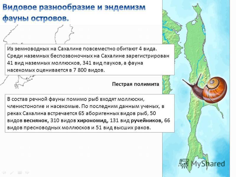 Из земноводных на Сахалине повсеместно обитают 4 вида. Среди наземных беспозвоночных на Сахалине зарегистрирован 41 вид наземных моллюсков, 341 вид пауков, а фауна насекомых оценивается в 7 800 видов. В состав речной фауны помимо рыб входят моллюски