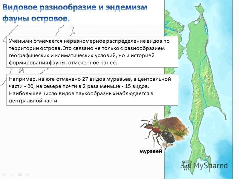 Учеными отмечается неравномерное распределение видов по территории острова. Это связано не только с разнообразием географических и климатических условий, но и историей формирования фауны, отмеченное ранее. Например, на юге отмечено 27 видов муравьев,