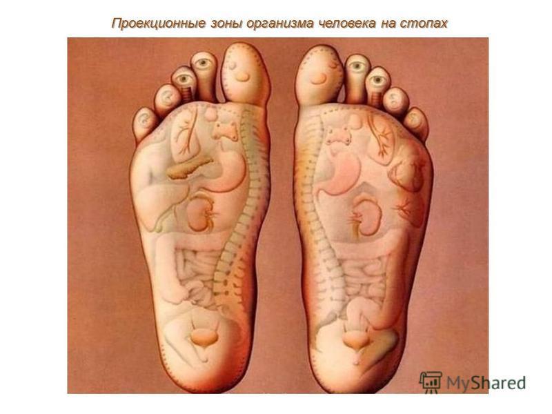 Проекционные зоны организма человека на стопах