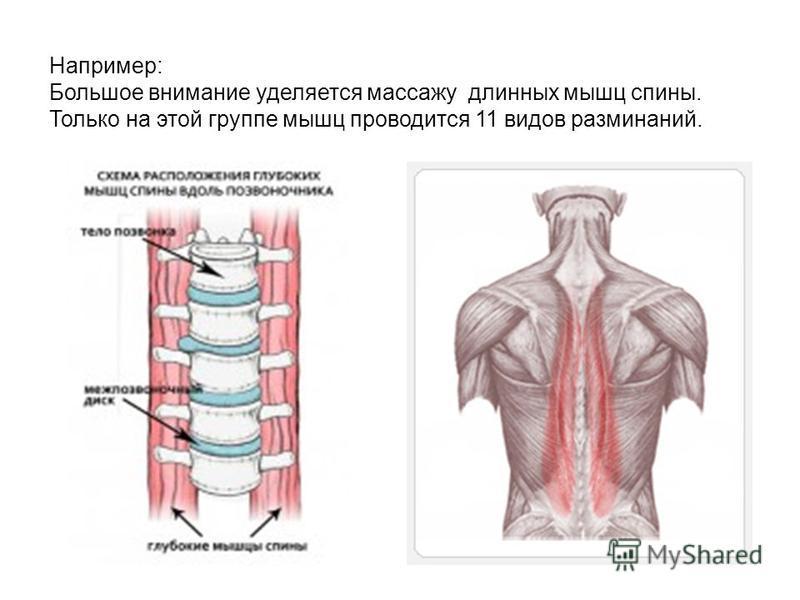 Например: Большое внимание уделяется массажу длинных мышц спины. Только на этой группе мышц проводится 11 видов разминаний.