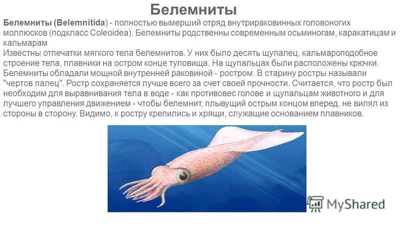 Белемниты Белемниты (Belemnitida) - полностью вымерший отряд внутрираковинных головоногих моллюсков (подкласс Coleoidea). Белемниты родственны современным осьминогам, каракатицам и кальмарам Известны отпечатки мягкого тела белемнитов. У них было деся