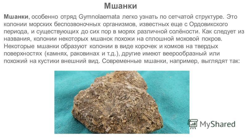 Мшанки, особенно отряд Gymnolaemata легко узнать по сетчатой структуре. Это колонии морских беспозвоночных организмов, известных еще с Ордовикского периода, и существующих до сих пор в морях различной солёности. Как следует из названия, колонии некот
