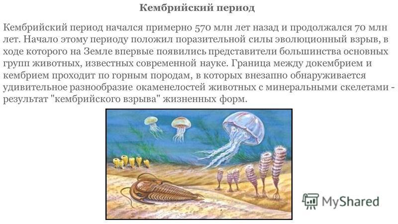 Кембрийский период начался примерно 570 млн лет назад и продолжался 70 млн лет. Начало этому периоду положил поразительной силы эволюционный взрыв, в ходе которого на Земле впервые появились представители большинства основных групп животных, известны