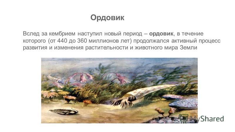 Вслед за кембрием наступил новый период – ордовик, в течение которого (от 440 до 360 миллионов лет) продолжался активный процесс развития и изменения растительности и животного мира Земли Ордовик