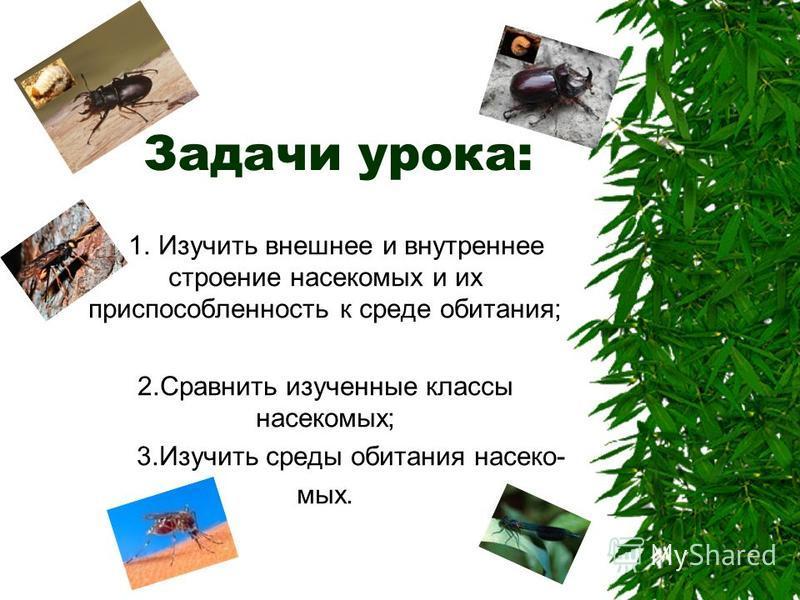 1. Изучить внешнее и внутреннее строение насекомых и их приспособленность к среде обитания; 2. Сравнить изученные классы насекомых; 3. Изучить среды обитания насекомых. Задачи урока: